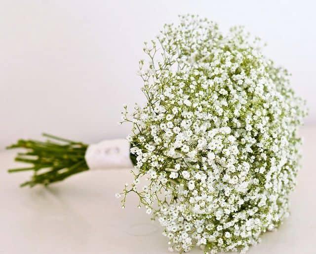 Hoa bi trắng tinh khôi