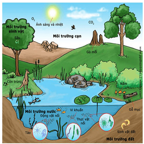 Hệ sinh thái hoàn chỉnh