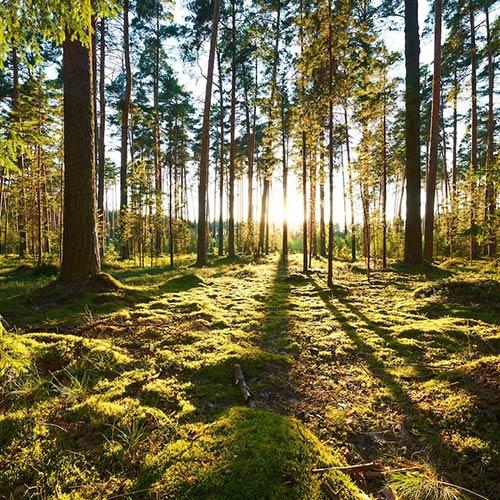 rừng cây